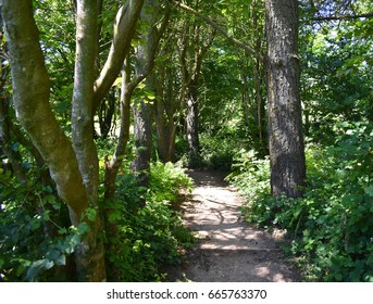 a path through the forest