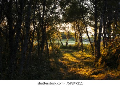 Path through forest at evening hours