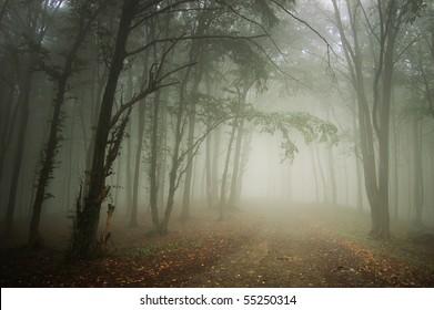 path through a forest with fog