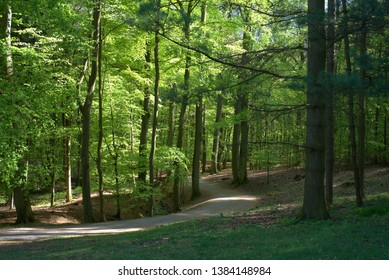 Path through a forest with fresh green leaves in the spring light