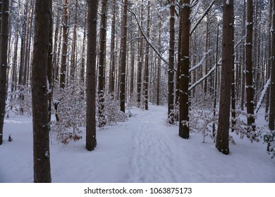 Path through forest with ground covered in snow with sun shinning through trees.