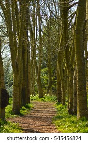 A path through a forest in spring time, it is lined by trees and has a small patch of daffodils at the end