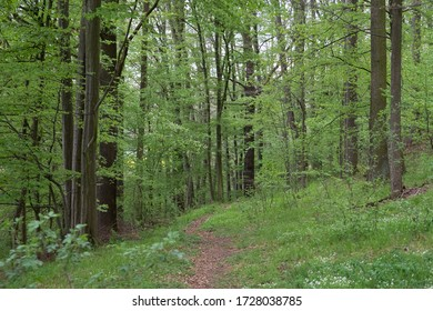 A path through the forest trees