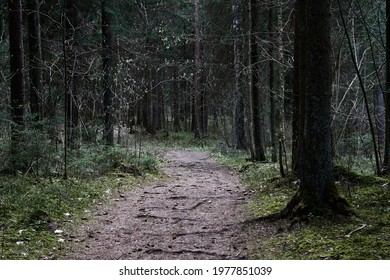 path through the forest trees, nature green wood  - Shutterstock ID 1977851039