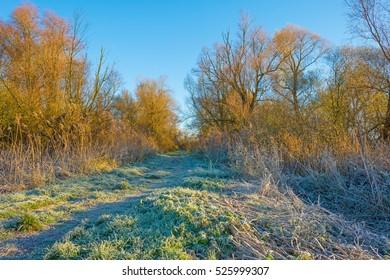 Path through a frozen field at sunrise in autumn