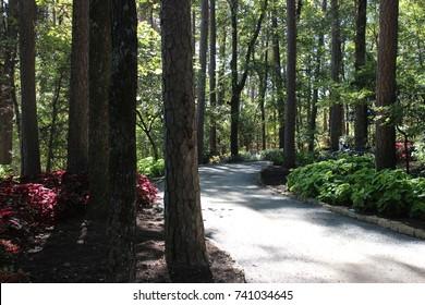 Elegant Path Through Garvan Woodland Gardens Great Ideas