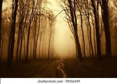 path through a golden forest with black trees
