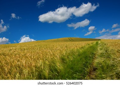 Path through a golden yellow field of wheat stretching to the horizon under a dramatic blue sky