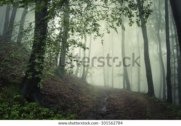 path through a green forest in summer