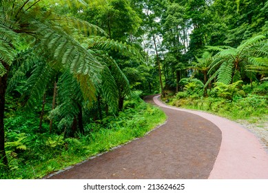 Path through jungle, Azores, Portugal, Europe