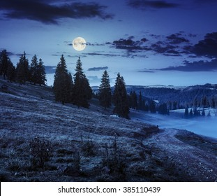 path through meadow down the hillside to coniferous forest  on the mountain at night in full moon light