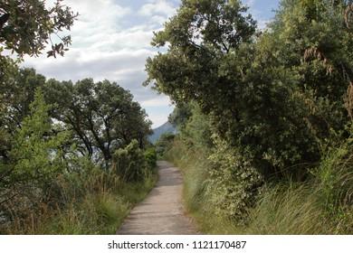 path through mediterranean maquis at  Maratea, Basilicata Italy