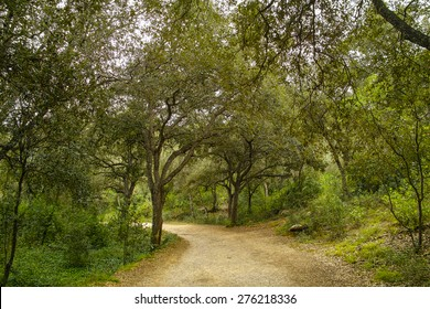 Path through mediterranean nature