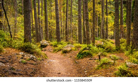 A path through an old mature pine woodland which forms part of the Hermitage located near Dunkeld in Perthshire