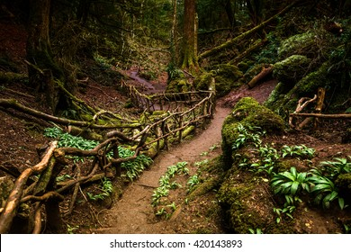 Path through Puzzlewood, forest of Dean.