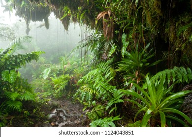 Path through the rainforest, wilderness, plants, flowers. The jungle on the island of Saba in the Caribbean. Beautiful exotic plants, huge elephant ears, fern. Place for walking, hiking, exploration.