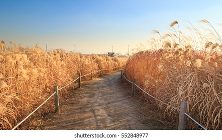 path through the reeds field in haneul park (another name sky park, one of the worldcup park in Seoul)
