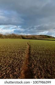 Path through sown field