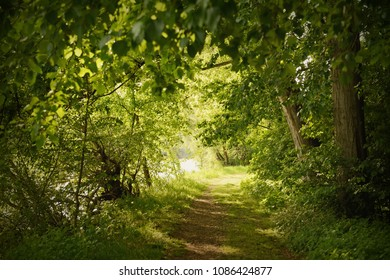 Path through the spring forest