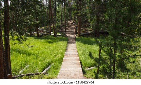 A path through a swampy patch of a hike in Yellowstone National Park