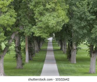 Path through Trees.