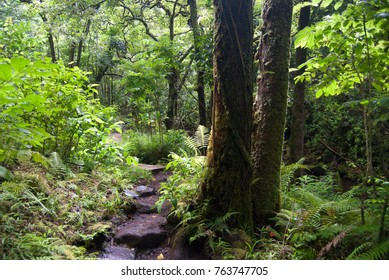 Path through a tropical forest