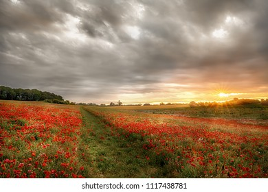 Path through wild poppies at dawn. Sunrise breaks over poppy field in rural Norfork UK.
