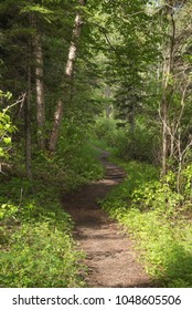 Path through the woods in Bow Valley provincial Park in Kananaskies Country in Alberta Canada