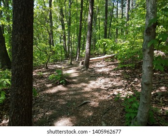 path or trail in the woods or forest with green leaves