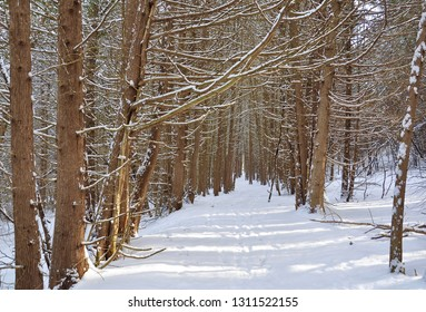 Path with trees full of snow