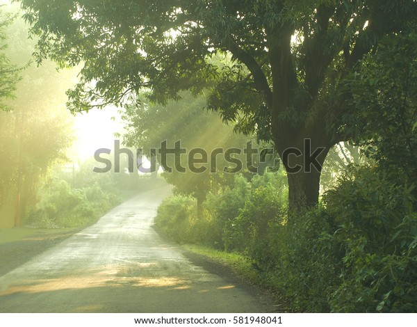 Path and trees with rays of the rising sun