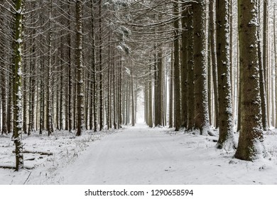 Path with trees and snow in Bavaria, Germany in winter