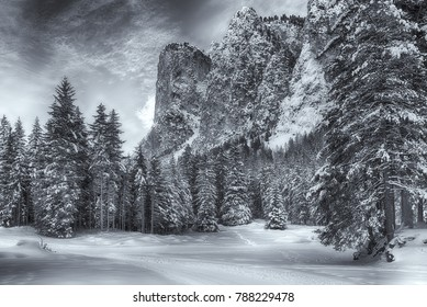path and trees in the snowy forest of Vallunga with mountain an clouds in background, Gardena Valley - Dolomiti, Trentino-Alto Adige