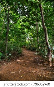Path in a tropical forest in Cuba