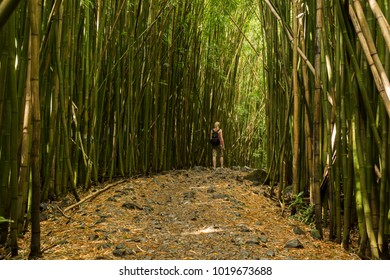 Path trough bamboo forest