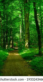 path, trough green forest in summer