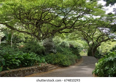 Path under a tree in Waimea Garden, Oahu, Hawaii