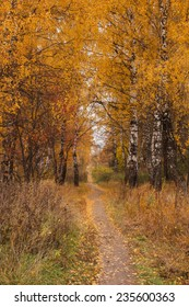 Path under a trees in the autumn forest