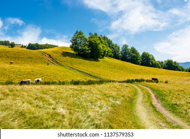 path uphill through grassy meadow. few cows grazing in the distance. lovely countryside summer scene