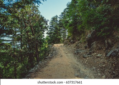 A path uphill through a pine forest in Dharamsala