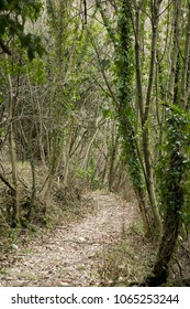 path in the village slapnik