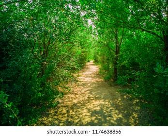 Path way in beautiful forest. Zaporozhye, Ukraine, 22 August 2018.