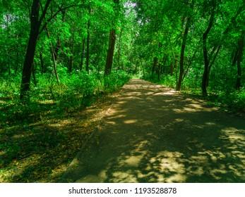 Path way in beautiful forest. Zaporozhye, Ukraine, 23 August 2018.
