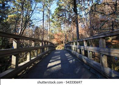 Path Way In Garvan Woodland Garden, Arkansas