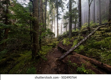 Path in the wet foggy forrest. Taken on the Chief Mountain, Squamish, British Columbia, Canada.