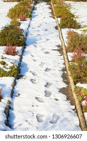 Path in winter with footprints in the snow.