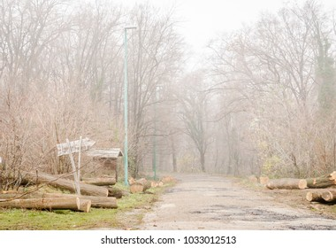 "Path in winter forest on Mount ""Fruška Gora"" near the town of Novi Sad"