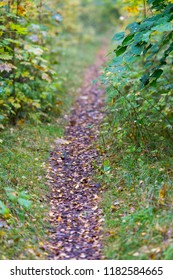 Path in to the woods
