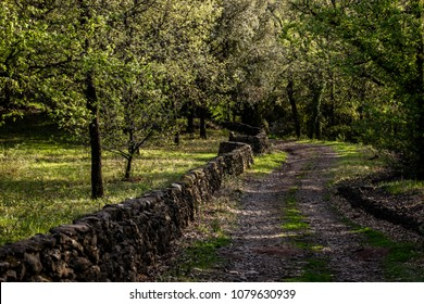 a path in the woods with low walls and olive trees