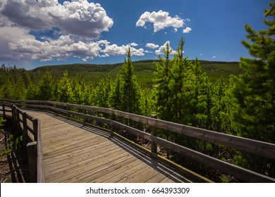 Path in the Yellowstone National Park. Wyoming. USA.